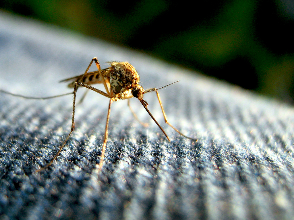 How To Protect Yourself From Malaria